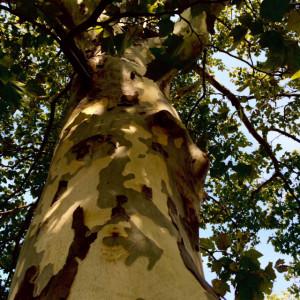 Camo Tree