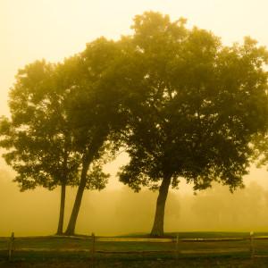 Fog Tree