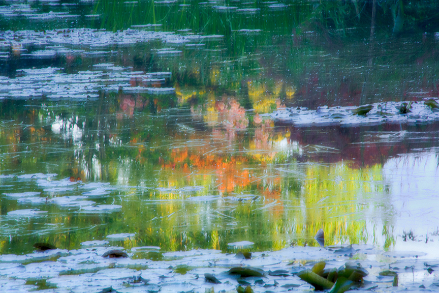 Reflection in Monet's Pond, Giverny