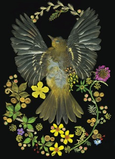 Fran Pelzman Liscio, Found Bird #3, 2013